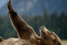 Bears / by Annie