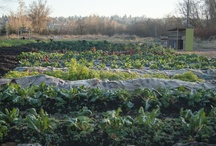 Urban Agriculture / In hopes of localizing and securing our food source while fostering a healthier community we are inspired by the opportunity this old yet new type of farming holds.