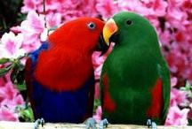 Pretty, Pretty Parrots / by Annie