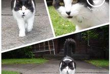 Katio : Kitty Kommunity / Who are the kitties in your neighborhood?
