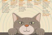 Felinology