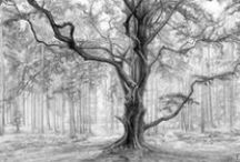 Drawing trees / natur