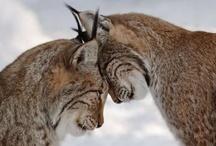 Beautiful Animals / by Shari Maddox