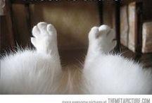 Cats for Sarah