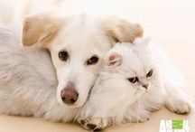 Animals - Cats & Dogs best friends / Cats and dogs are two of the world's most universal species, living side by side with people in hundreds of millions of homes and communities.