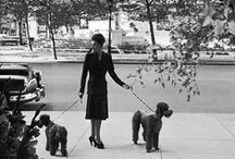Poodles - Antique Photo's