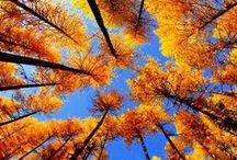 Fall / by Megan Shilobrit