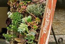 jardins de todo tipo / plantas diferentes