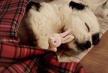 Cuddle inspiration