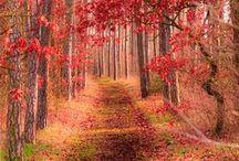 fantastic nature / by Andrea Valdesolo