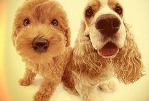 Celebrity Favorite Pets / Pets that your favorite celebrities love!