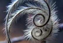 vrilles et spirales