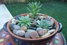 Maravillosos cactus y suculentas