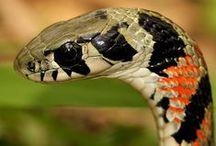 Reptiles / serpents