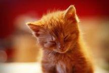 Sleepy Kitty / Sleepy kitties
