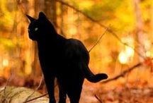 Black Cats / Beautiful black cats!