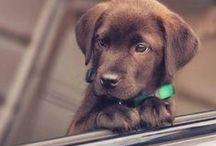 Puppy / Puppies
