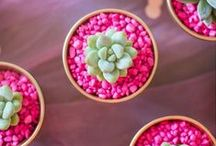 Colour - Pink / Pink, pink, pink