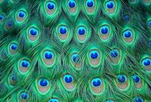 Colour - Turquoise / Turquoise, turquoise, turquoise