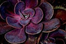 Colour - Purple / Purple, purple, purple