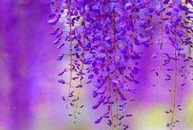 purple&violet love