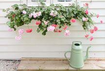 Gardeninspirstion