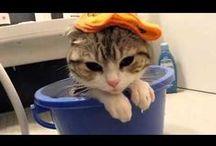 Cute & Funny videos