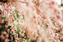 flowers n garden