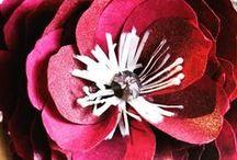 Paper flowerd / by Ingrid Sundberg