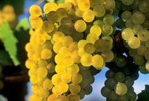 Chardonnay Around the World / by Chardonnay Symposium
