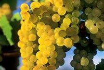 Chardonnay Around the World / by Chardonnay Symposium