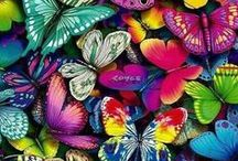 Butterflies / I love Butterflies - Enough Said xxx <3 xxx