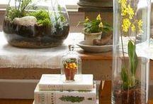 Crafts - Terrariums