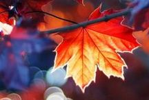 Dreams of Autumn
