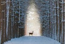 nádherná zima