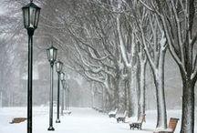 Winter dream / Nature, mood & style in winter