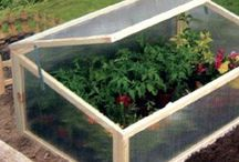 small greenhouses / greenhouses