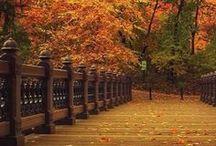 FALL in love / Fall, automn, ősz