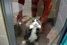 funny (cats)