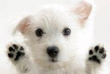 Cute Doggins