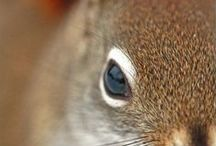squirrel chatting / all about cute little squirrels / by Bonnie Hughes