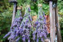 Sušení bylinek | Drying herbs / Sušení bylinek - rady, tipy, nápady. www.permadesign.cz