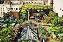 Městská permakultura | Urban Permaculture