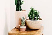 ✳︎ PLANTS ✳︎