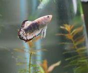 Aquarium Plants Ottawa / Aquariums And Aquatic Plants