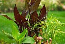 Gardening / gardening and outdoor diy's