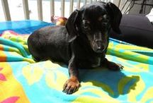 In love with animals / I love animals - I have a mini-dachshund and live on a cattle ranch.