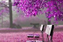 jardins / by sandra favoretto