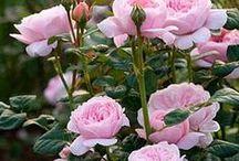 fiori / figli delle piante.chiari.scuri,colorati o pallidi sono sempre meravigliosi