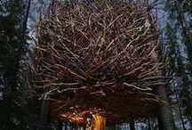 236 Treehouse